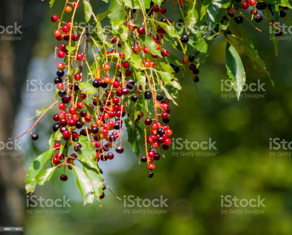 Flowering plants, trees and shrubs stock photo