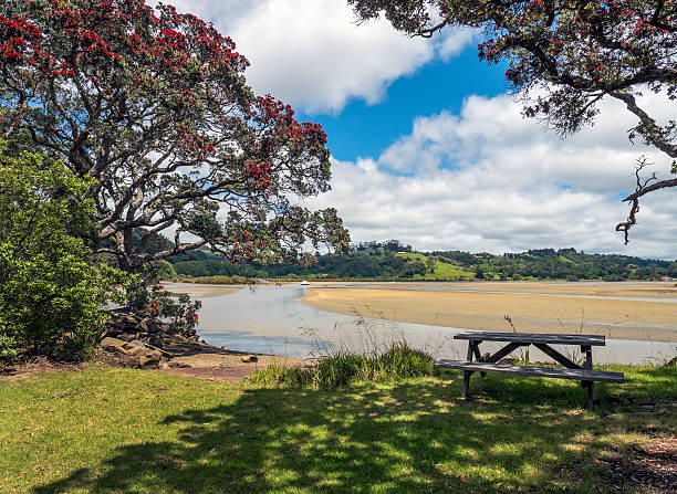 flowering pohutakawa, puhoi river, new zealand - provincial park stock photos and pictures
