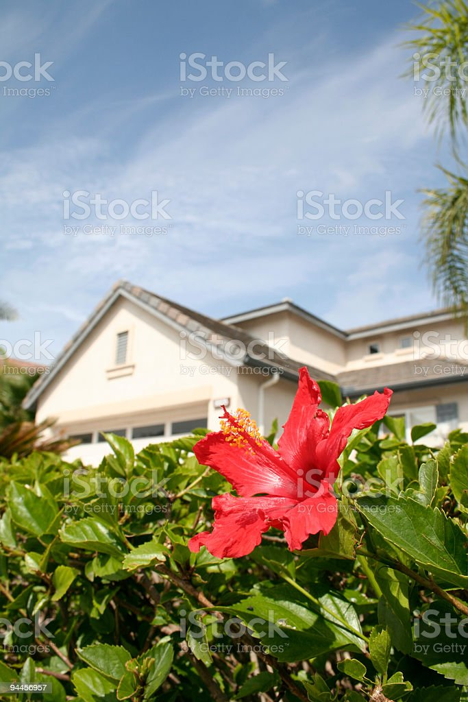 Flowering Real Estate royalty-free stock photo