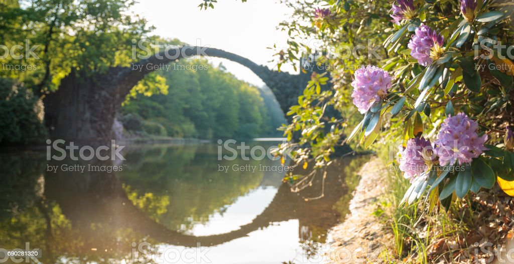 Flowering rhododendrons in a park in Kromlau, Saxony, Germany stock photo