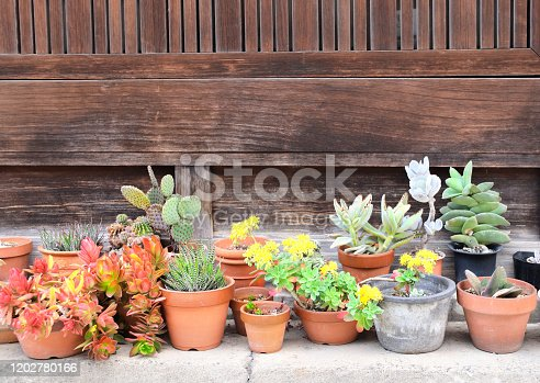 Flowering succulents and cacti in rustic clay pot on stone sidewalk. Small ornamental urban garden in Bikan district, Kurashiki, Japan. Copy space for text