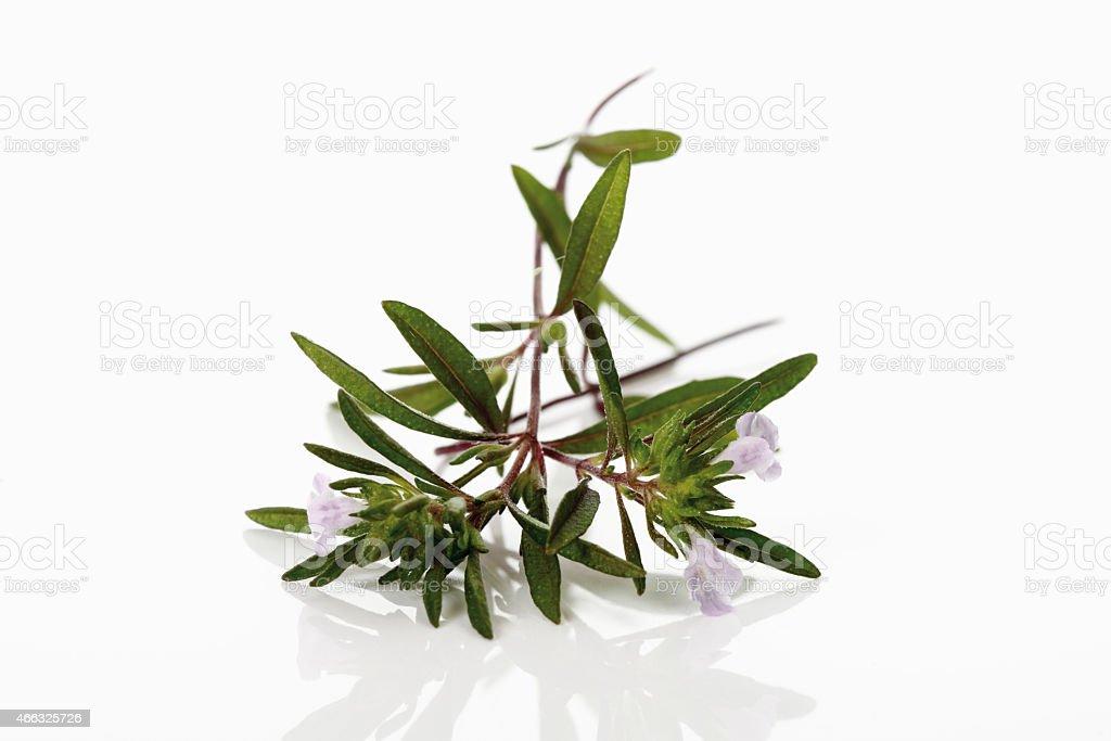 Flowering summer savory (Satureja) stock photo