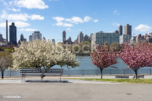 Beautiful pink and white flowering crab apple trees during spring along the riverfront of Rainey Park in Astoria Queens New York with the East River and a bench
