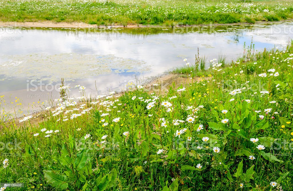 Flowering wild plants at the edge of small stream - foto de acervo