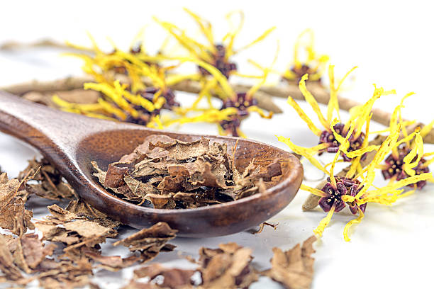 flowering witch hazel (Hamamelis) and wooden spoon with dried le flowering witch hazel (Hamamelis) and wooden spoon with dried leaves for homemade skin care cosmetics and bath additive on a white background, closeup with selected focus, narrow depth of field saxifragales stock pictures, royalty-free photos & images