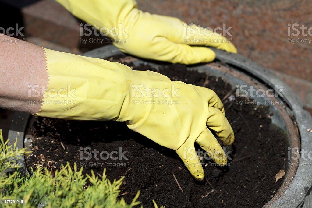 Flowerpot anew plant stock photo
