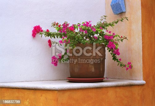 168248826 istock photo Flowerpot on Ledge, Mexico 186832799