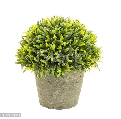 Decorative grass in flowerpot isolated on white background.