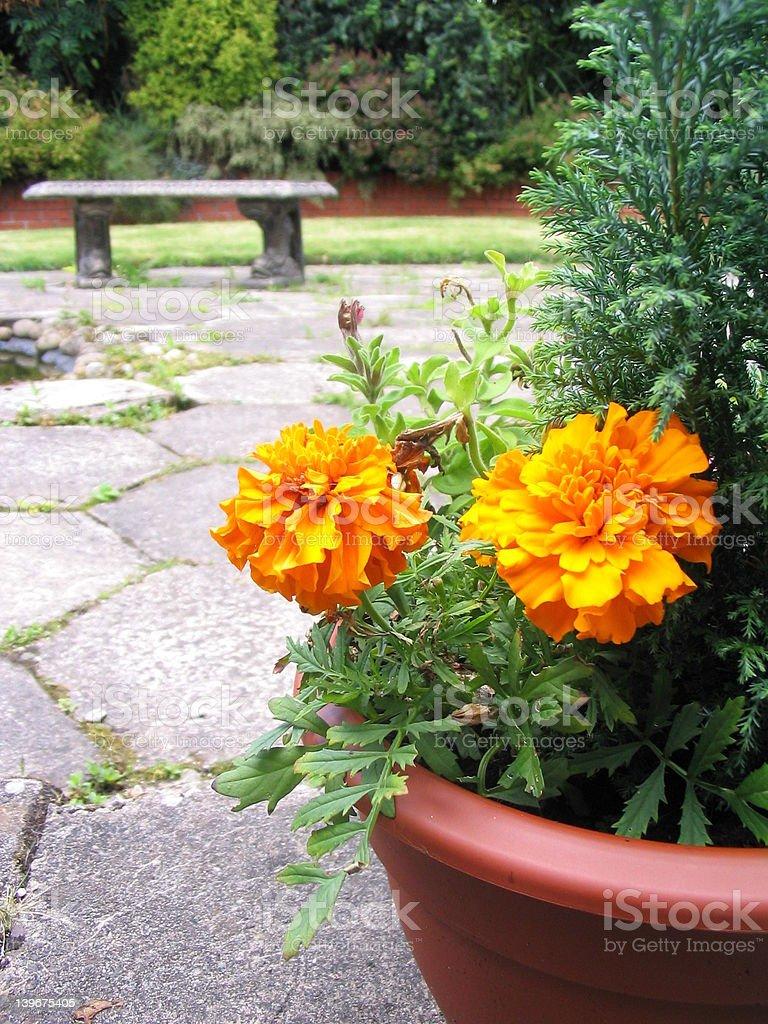 Flower-pot royalty-free stock photo