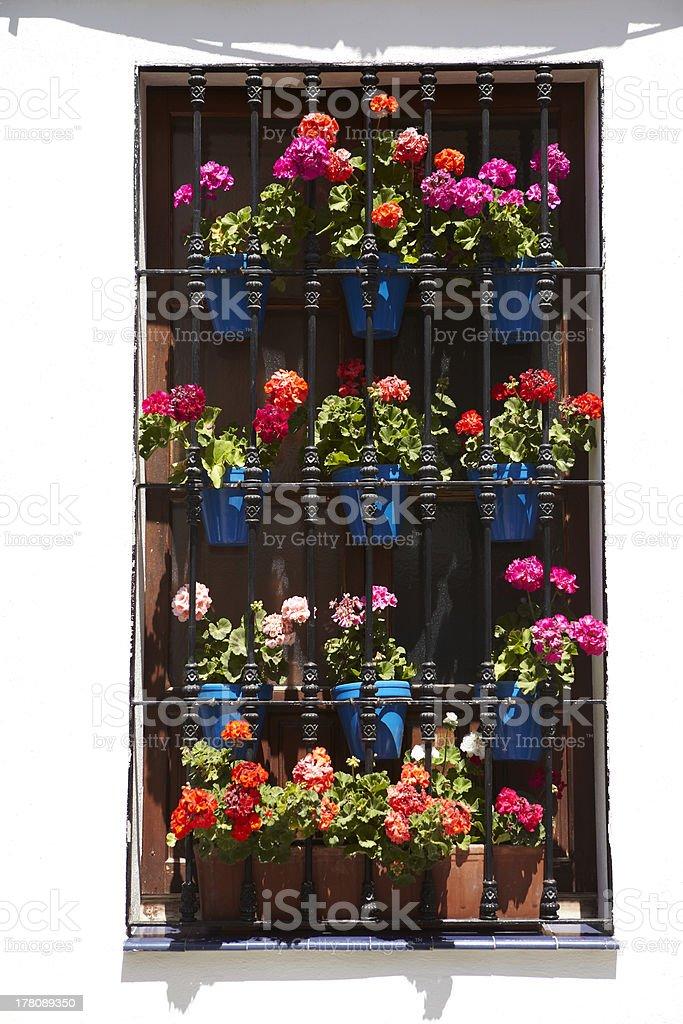 Flowerpot stock photo