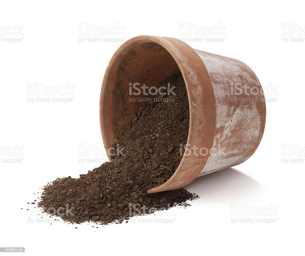 Flowerpot Spill Isolated with clipping path stock photo