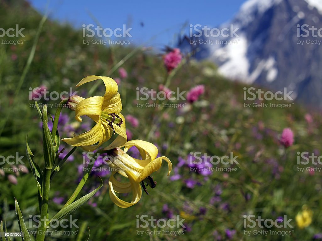 Flowers [6] royalty-free stock photo