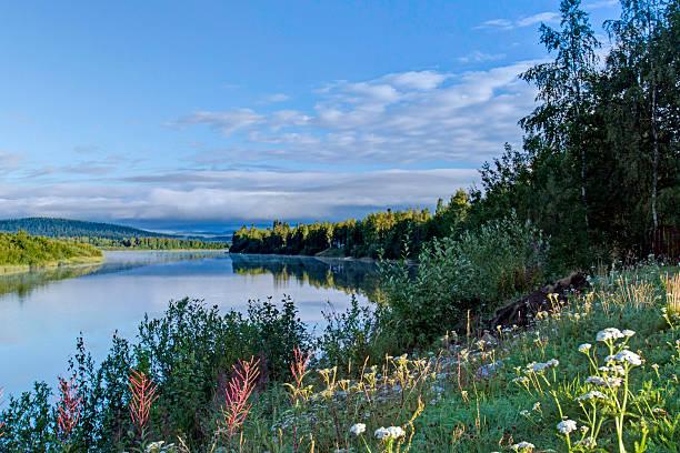 Blumen am Ufer des Flusses Ivalo Ivalo,, Finnland – Foto