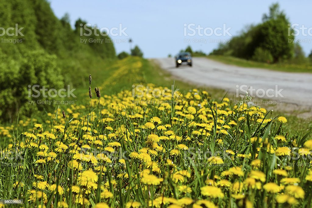 flowers along the road royalty-free stock photo