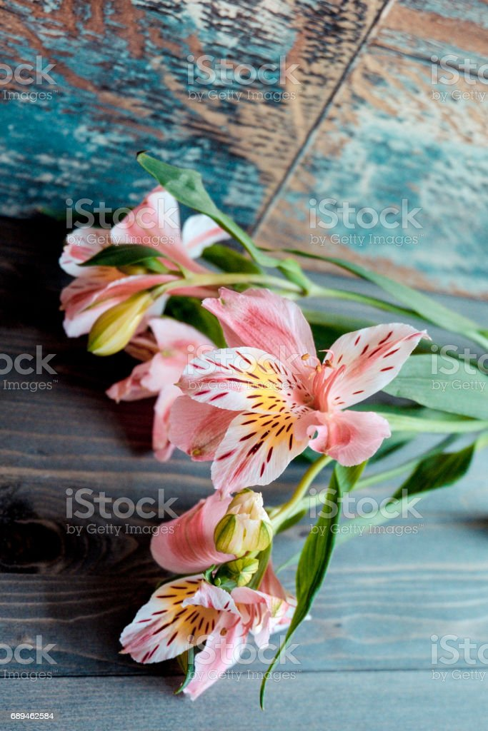 flowers Alstroemeria pink flowers with spotted petals on a wooden background with a very interesting texture stock photo