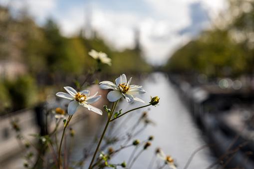 Flowers Amsterdam Canal - zdjęcia stockowe i więcej obrazów Amsterdam