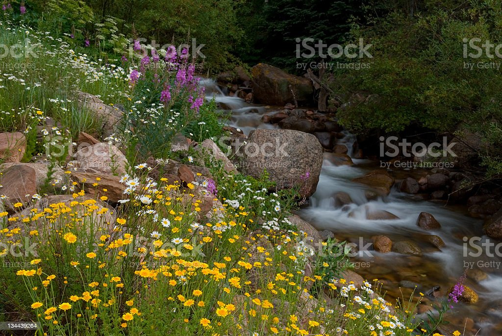 Flowers and Alpine Meadow with Stream royalty-free stock photo