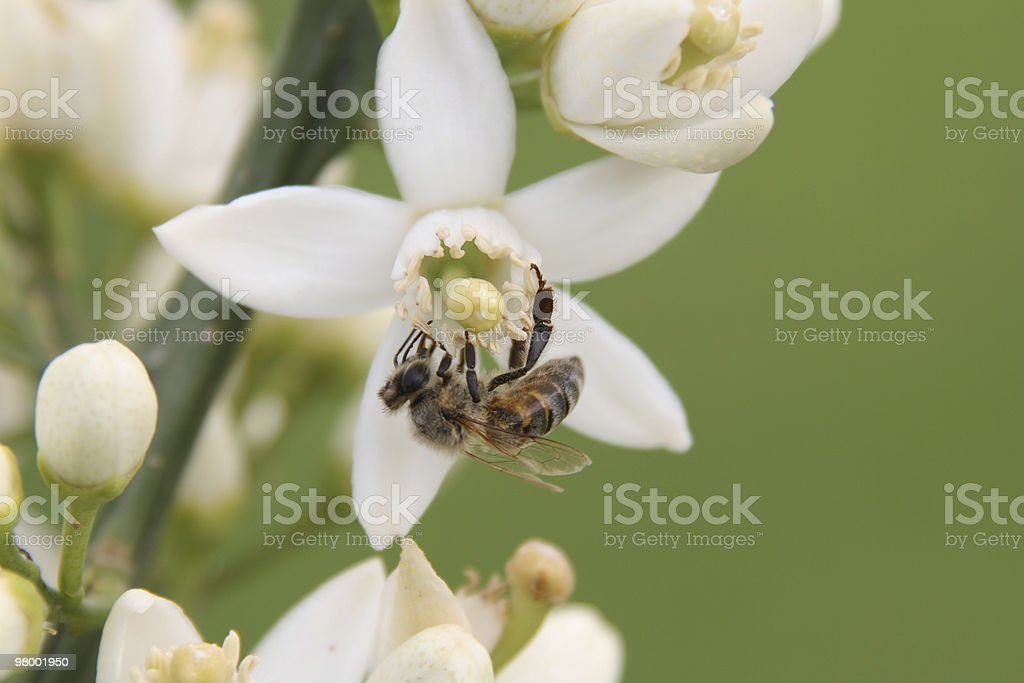 Flowers and bee 2 royalty free stockfoto