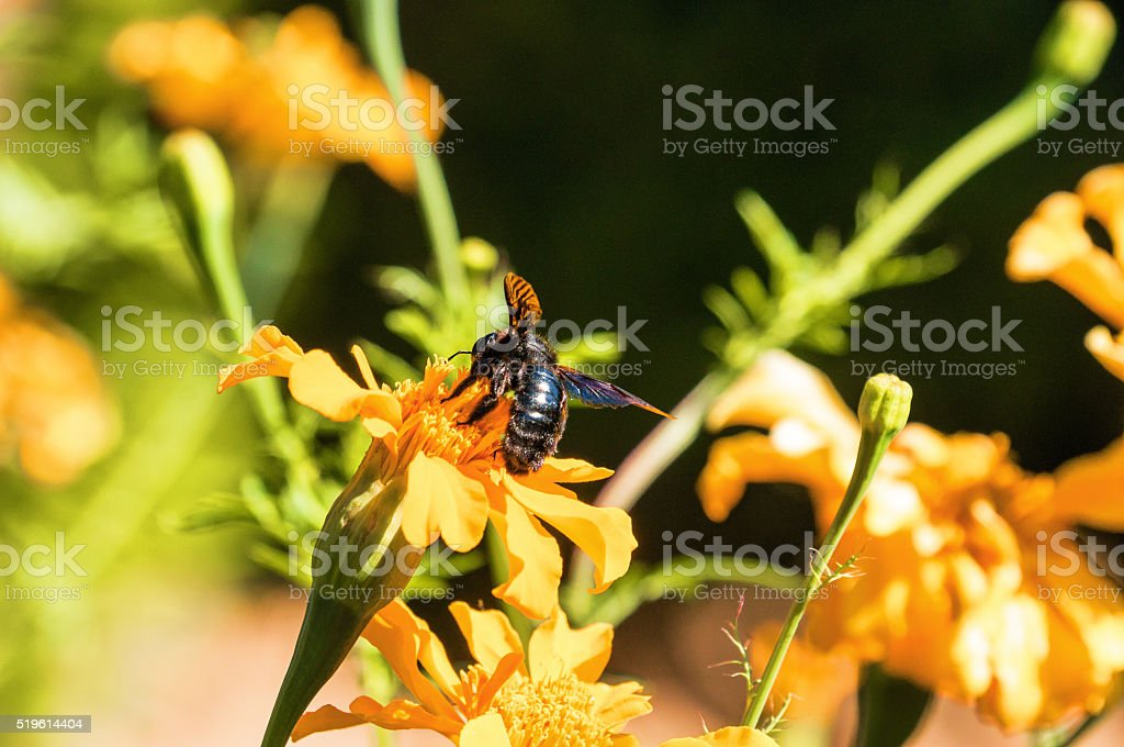 Flowers and bee in Generalife in Granada, Andalusia province, Spain. stock photo