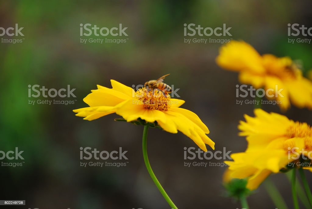 Flowers and bees stock photo