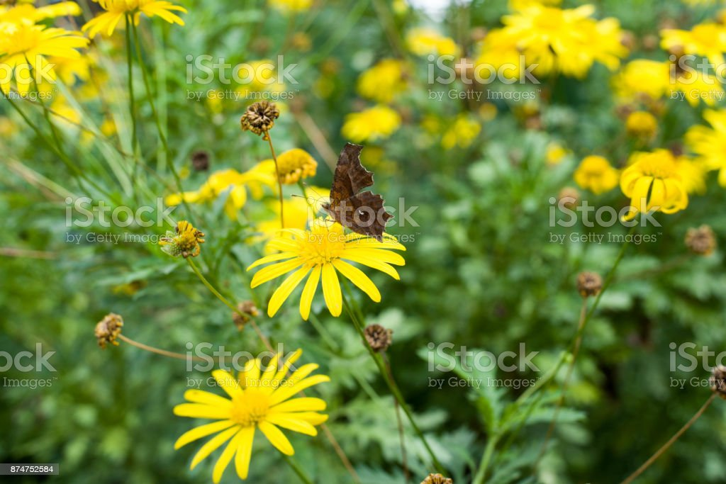 Flowers and butterflies stock photo