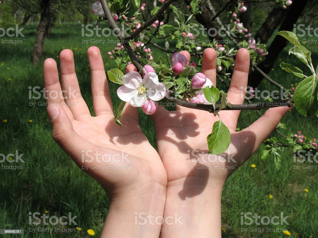Flowers and caring hands royalty-free stock photo