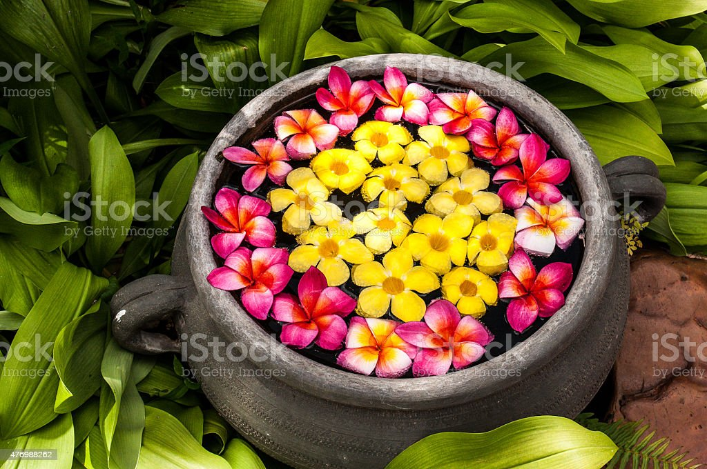 Flowers and colors stock photo