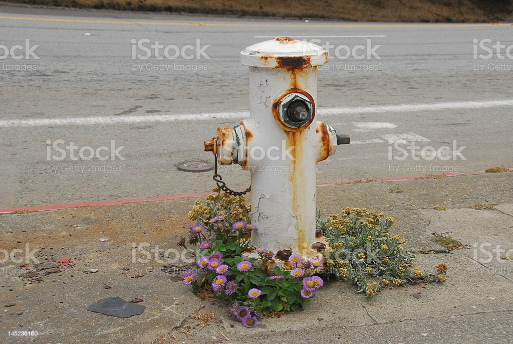 Flowers and fire hydrant stock photo