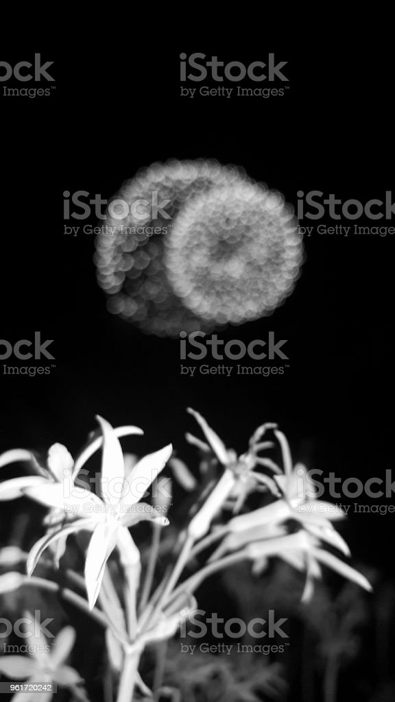 Flowers and Fireworks stock photo