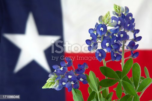 Photo of bluebonnet flower which are the state flower of Texas with a Texas flag in the background