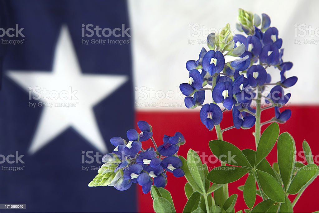 Flowers and Flag stock photo
