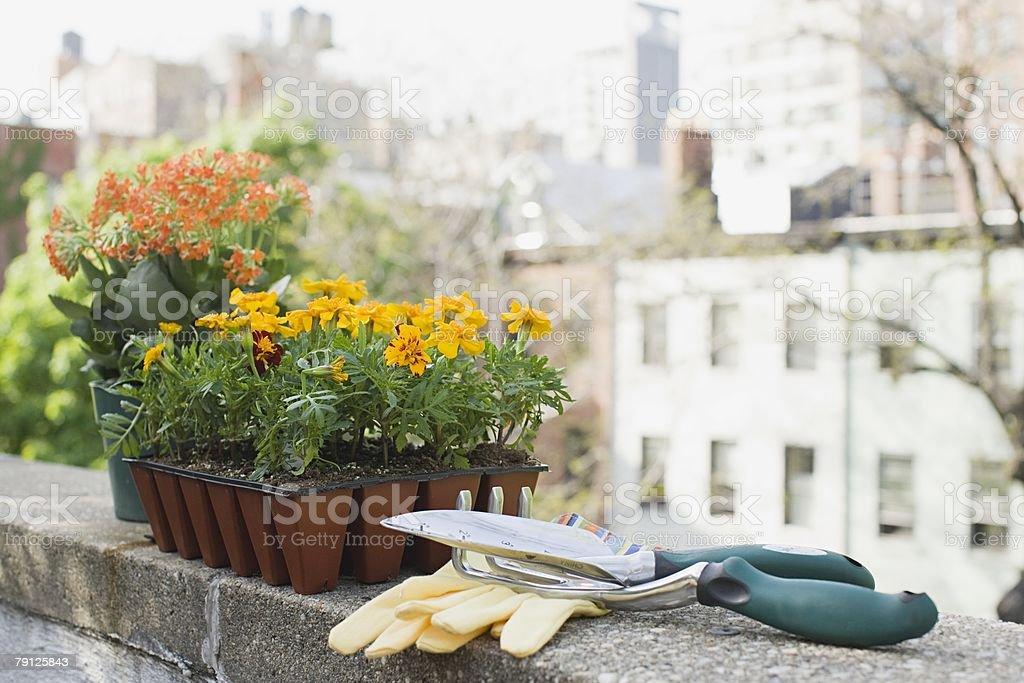 Flowers and gardening equipment 免版稅 stock photo