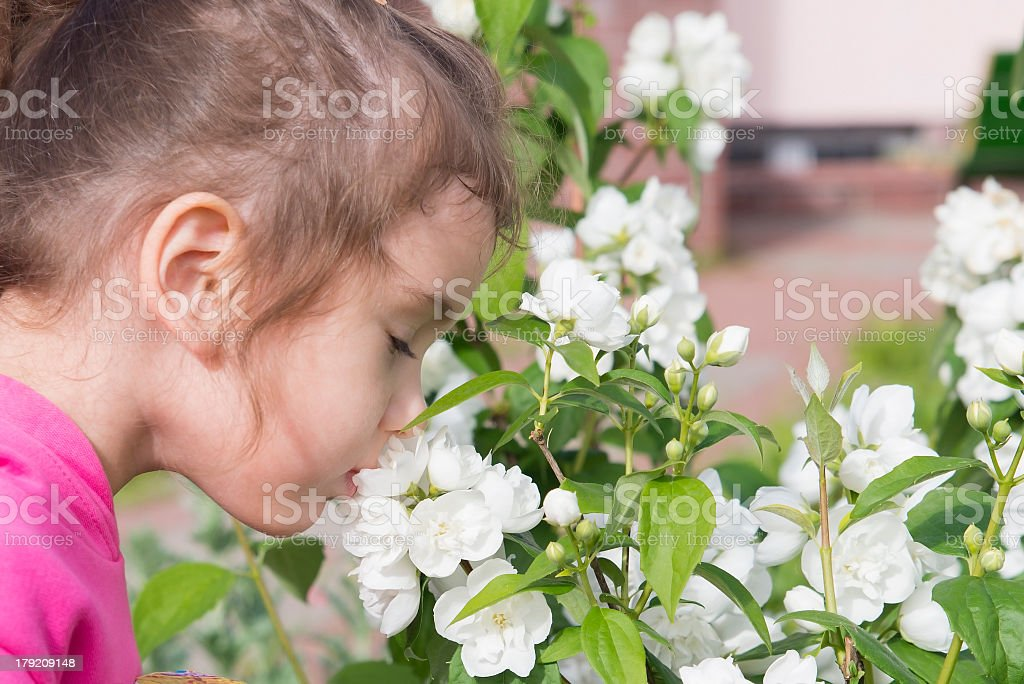 flowers and girl royalty-free stock photo