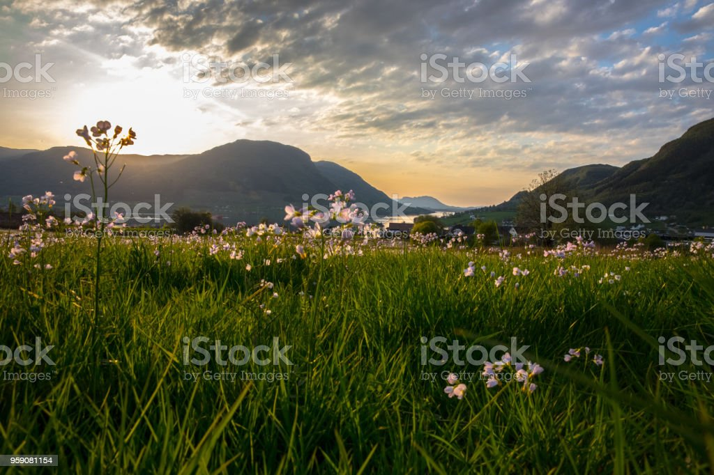 Flowers and grass near fjord in Norway stock photo