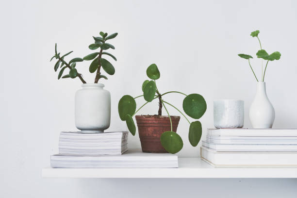 Flowers and green plants on a shelf White vases with succulents and green cuttings houseplant stock pictures, royalty-free photos & images