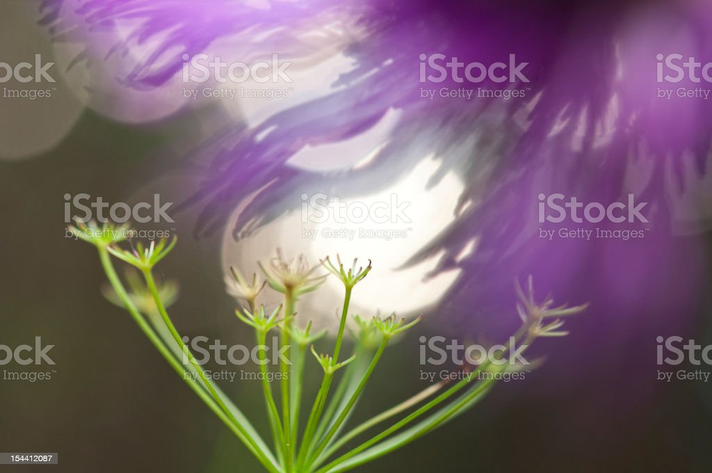 Flowers and herbs. Light. royalty-free stock photo