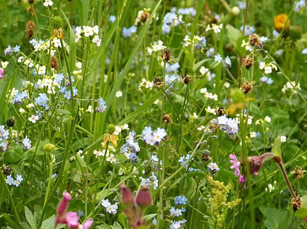Blumen und Kräuter auf einer Bergwiese – Foto