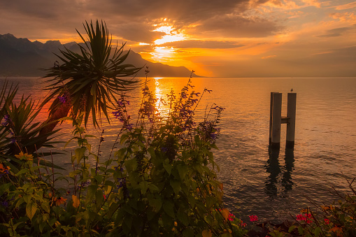 Flowers and Lake Geneva, Switzerland sunset