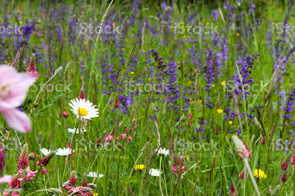 flowers and leafs in may in south german spring landscape photo libre de droits