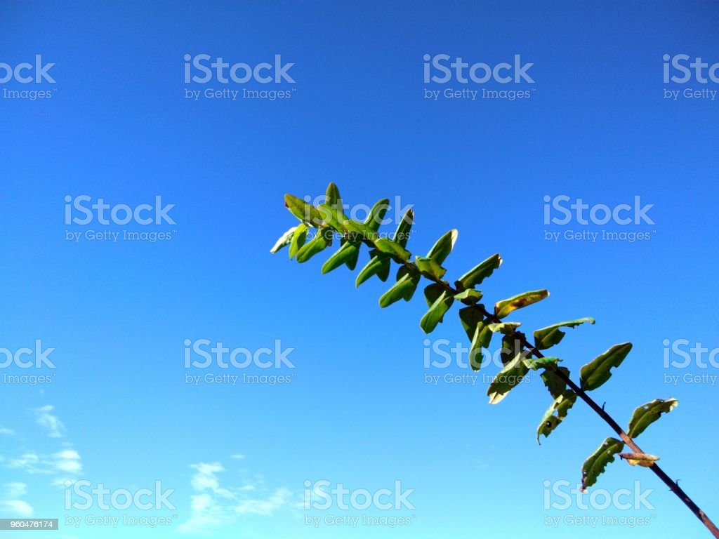Flowers and leave plants on the mountain and against blue sky.Copy space stock photo