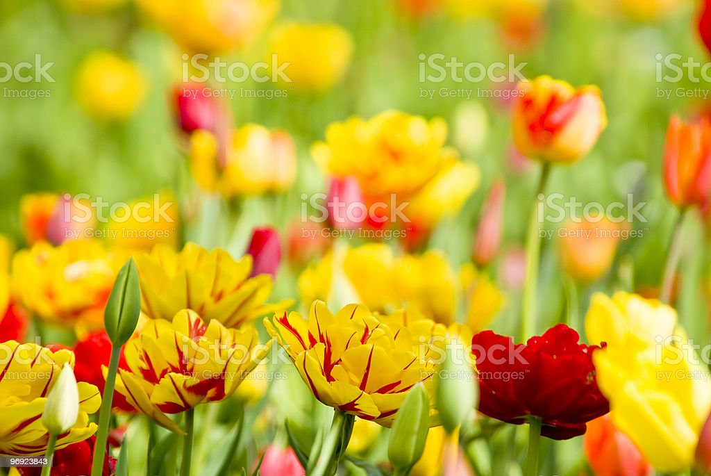 flowers and meadow spring royalty-free stock photo