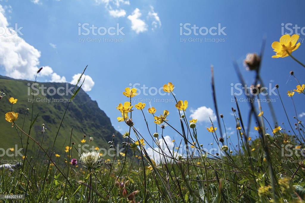 Flowers and mountain royalty-free stock photo