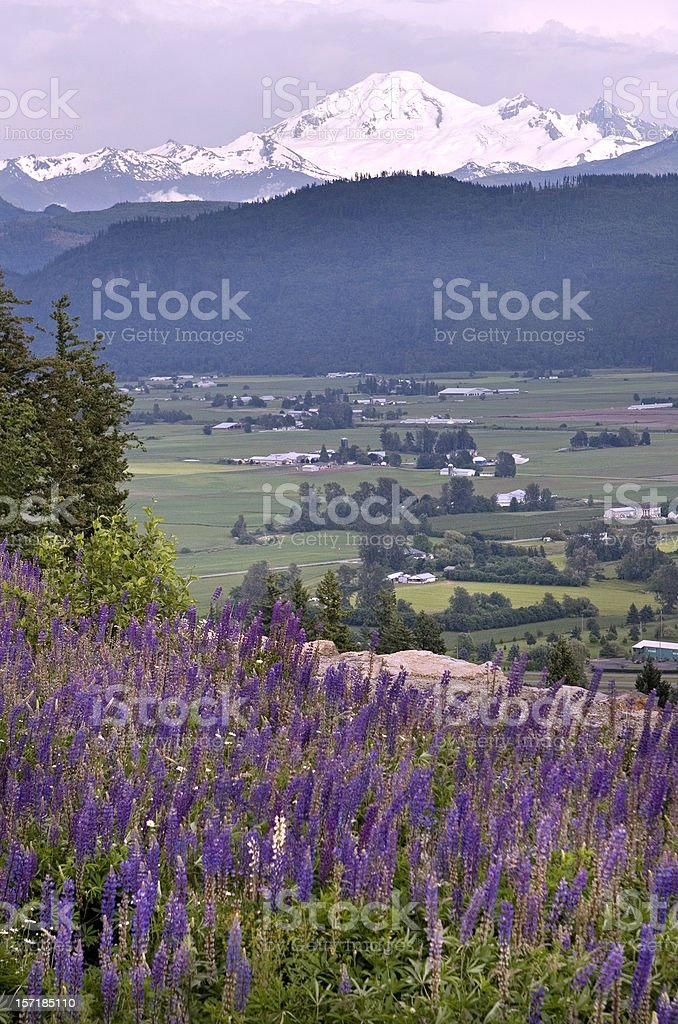 Flowers and mountains stock photo