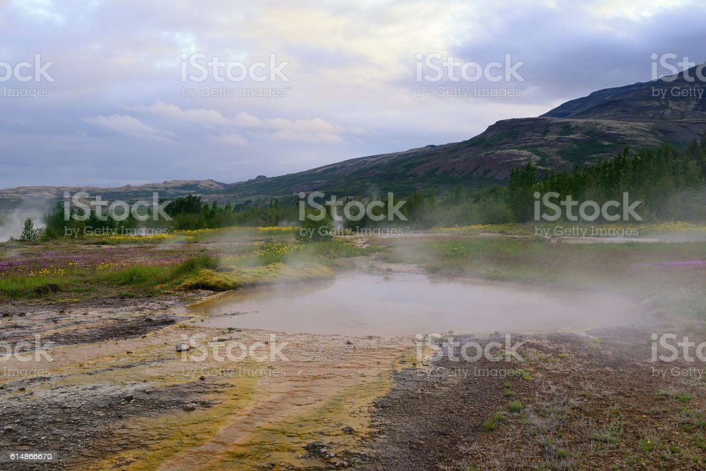 Flowers and Mud Pots at Geysir Hot Springs in Iceland stock photo