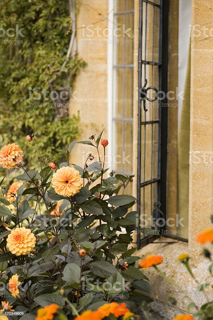 Flowers and old window royalty-free stock photo