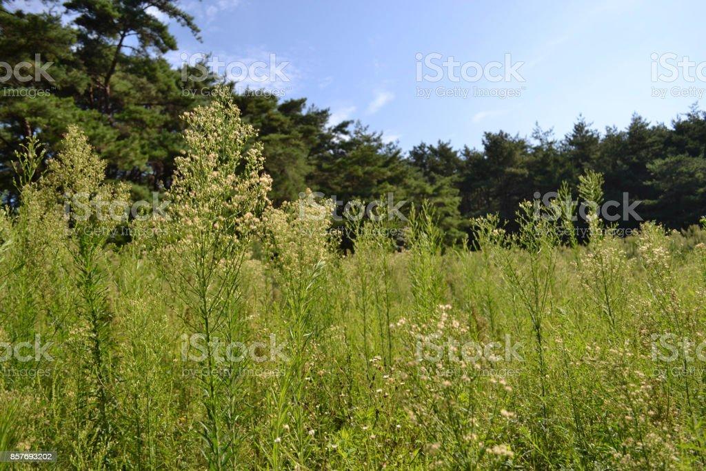 Flowers and plants around Namsan Mountain stock photo