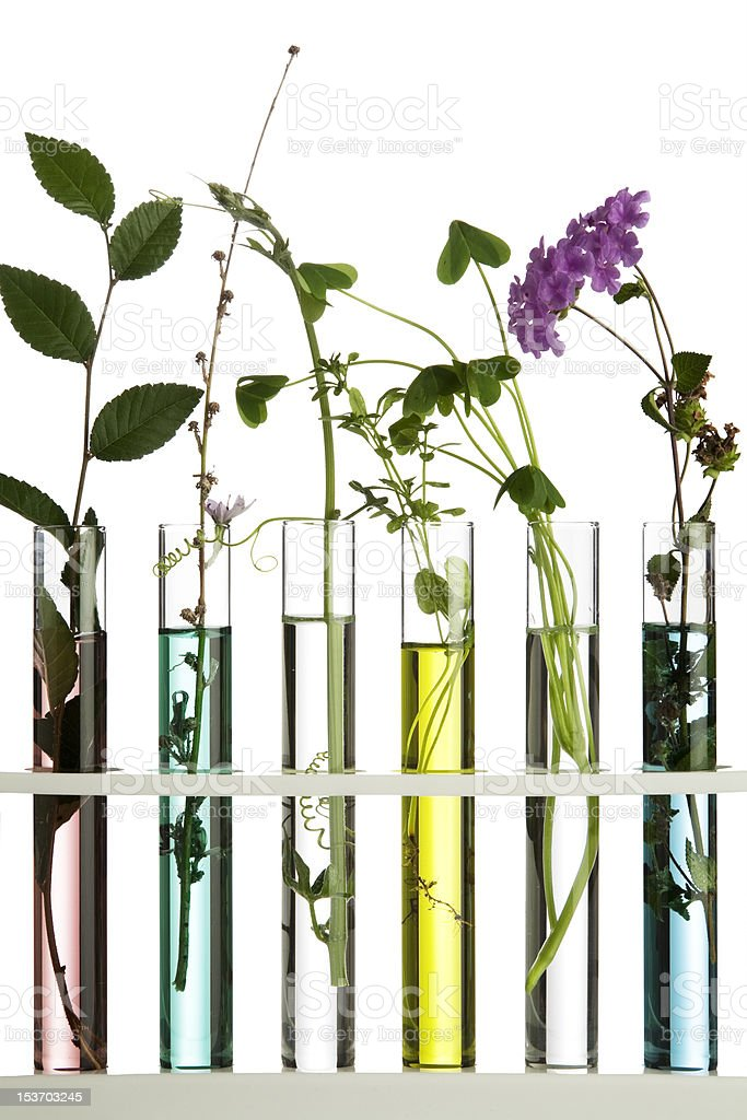 Flowers and plants in test tubes stock photo