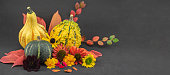Studio image of pumpkins, autumn flowers and leaves arranged by color, on a black background
