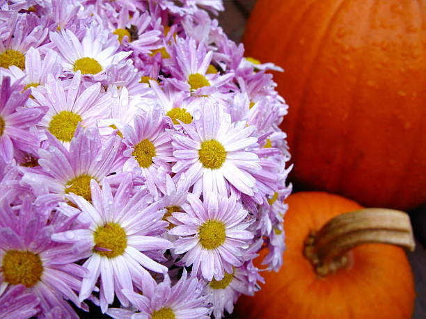 Flowers and Pumpkins stock photo