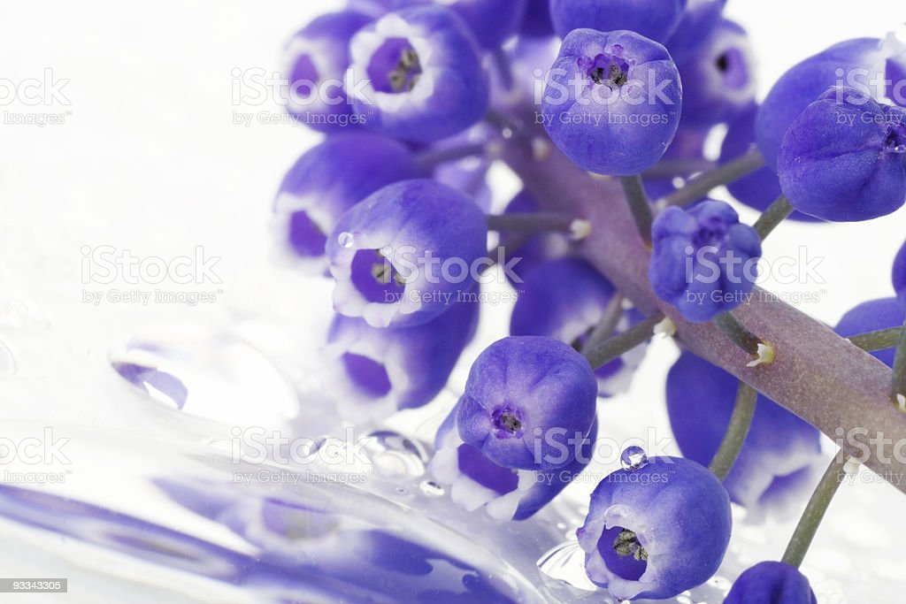 flowers and reflection in the water royalty-free stock photo
